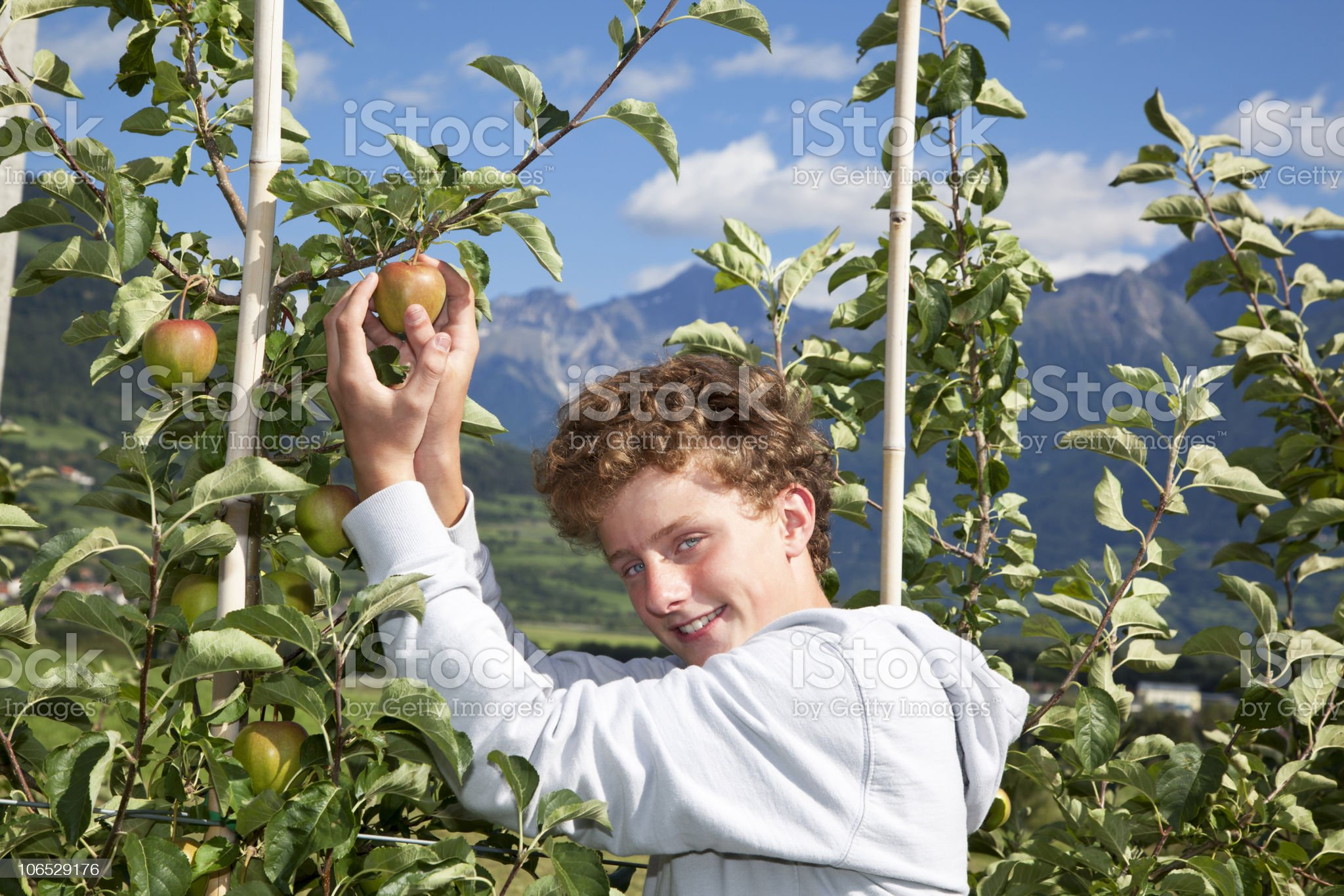 smiling teenager picking an apple royalty-free stock photo