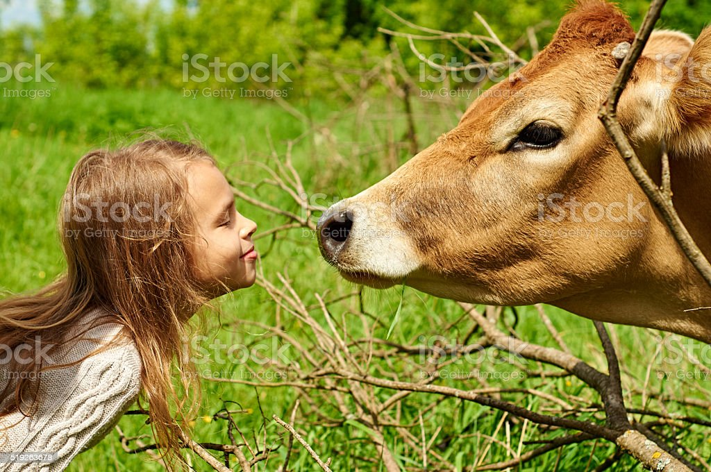 Smiling ten-year-old girl with a cow stock photo