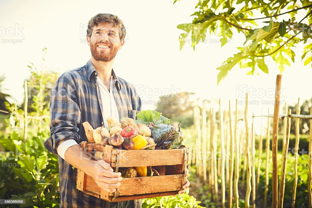 Smiling thoughtful male carrying vegetables in crate at organic stock photo