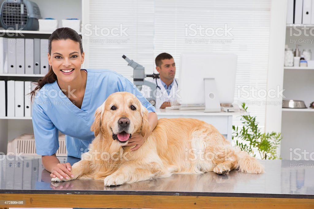 Smiling vet examining a dog stock photo