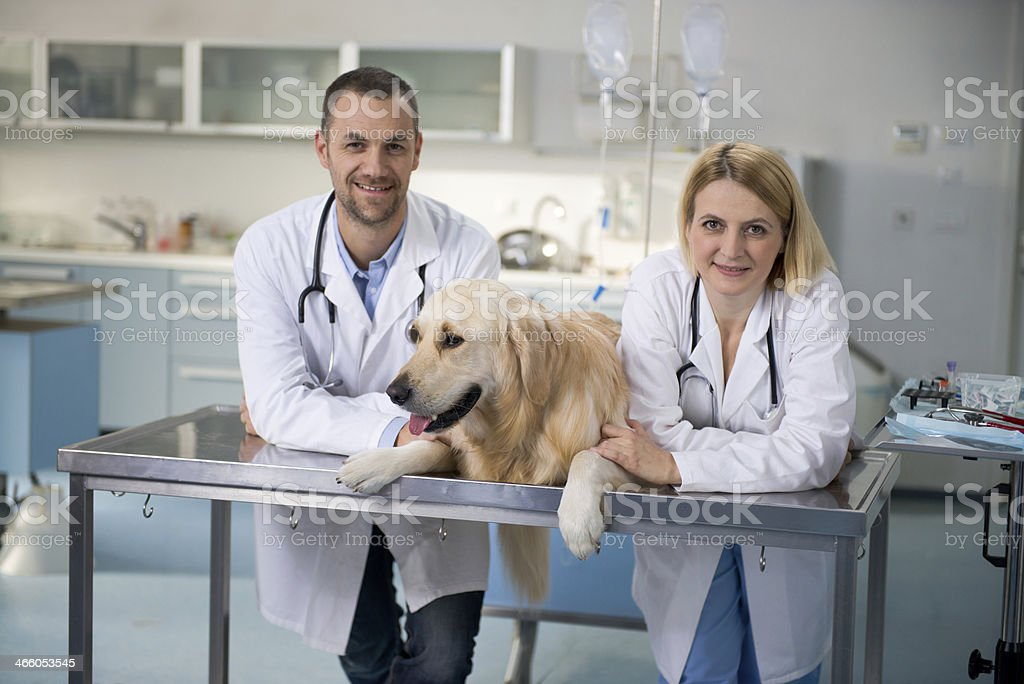 Smiling Vets with healthy dog stock photo