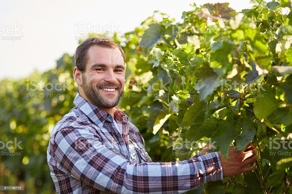 Smiling winemaker in the vineyard stock photo