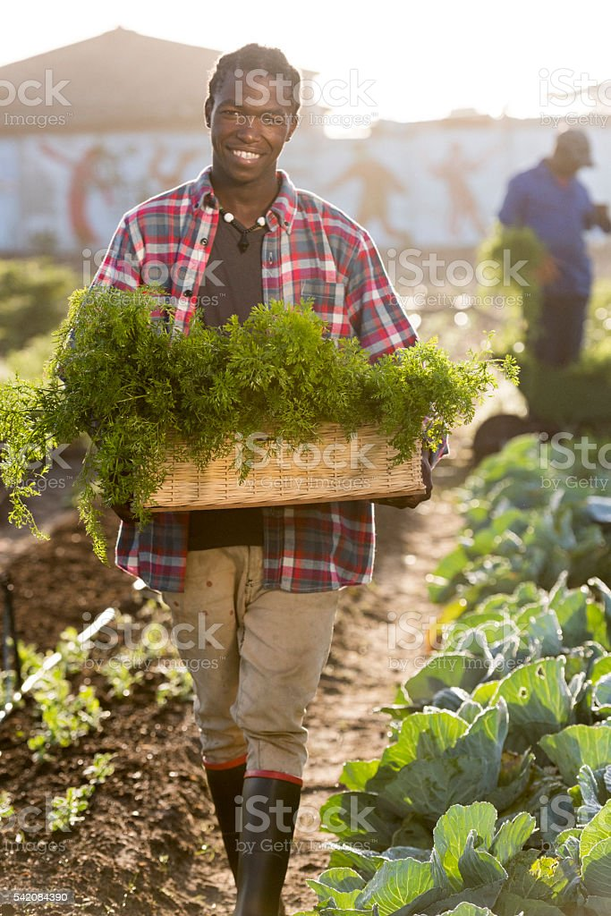 Smiling Young African man holding vegetables Basket stock photo