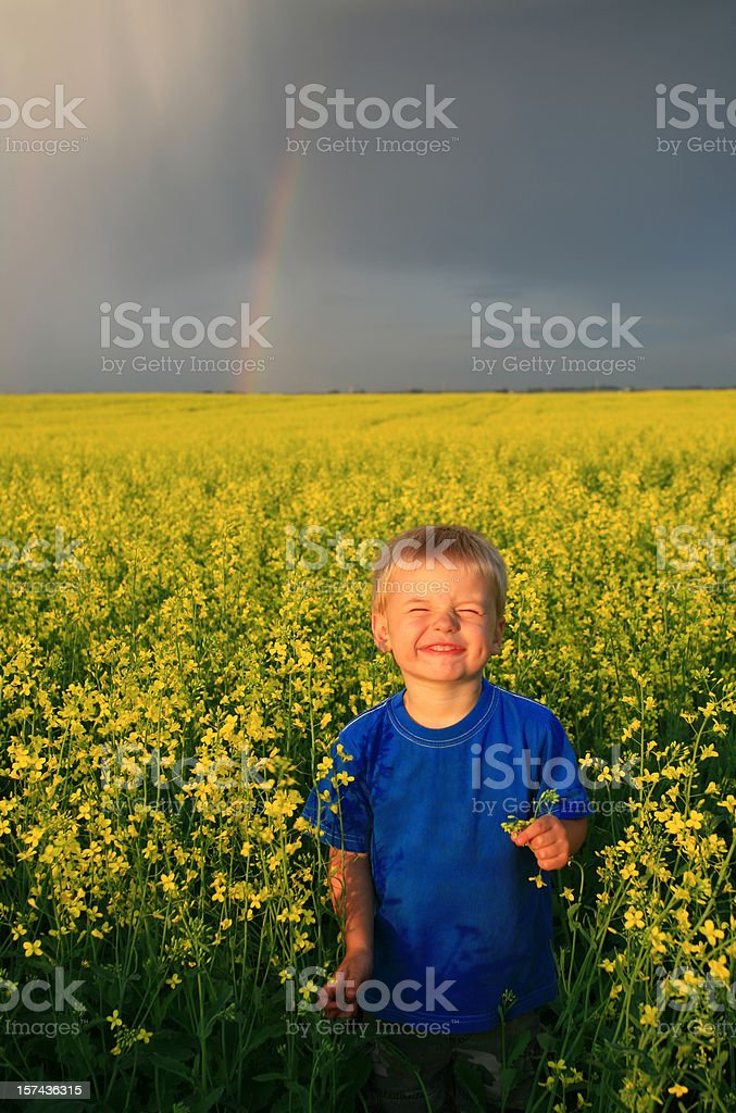 Smiling Young Boy in a Canola Field royalty-free stock photo