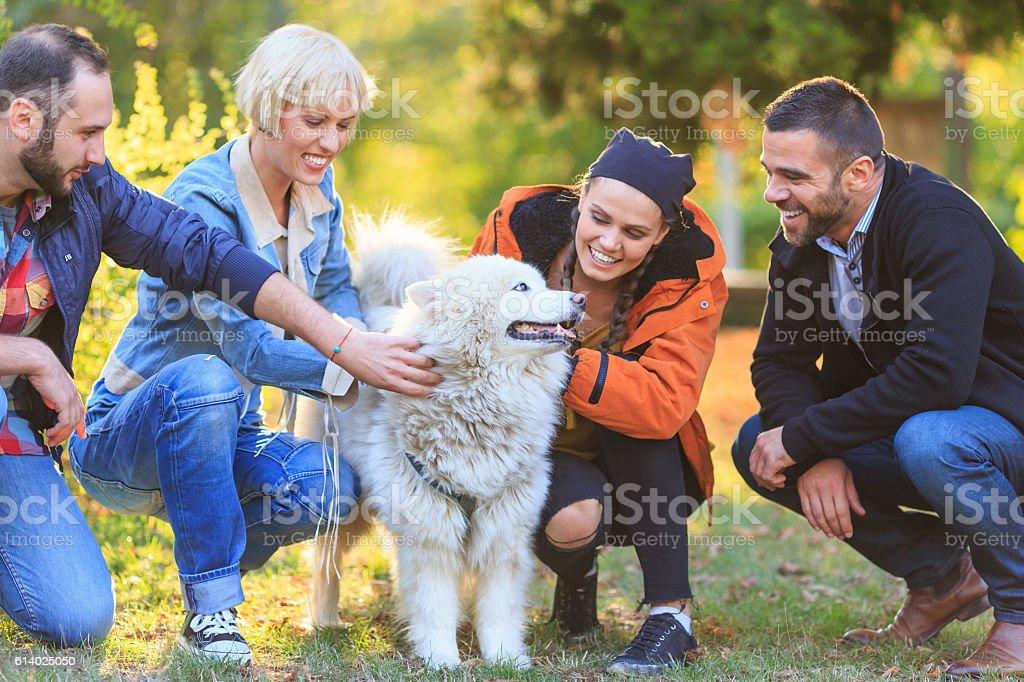 Smiling young people caressing a samoyed dog stock photo