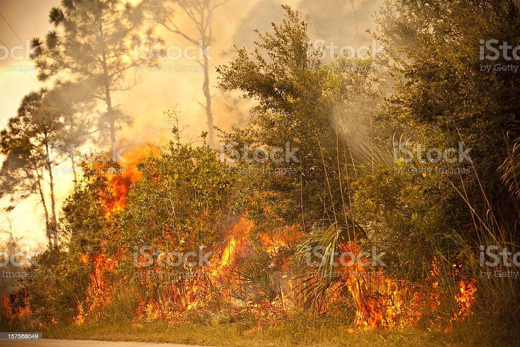 Smoke and burnt wilderness emergency stock photo