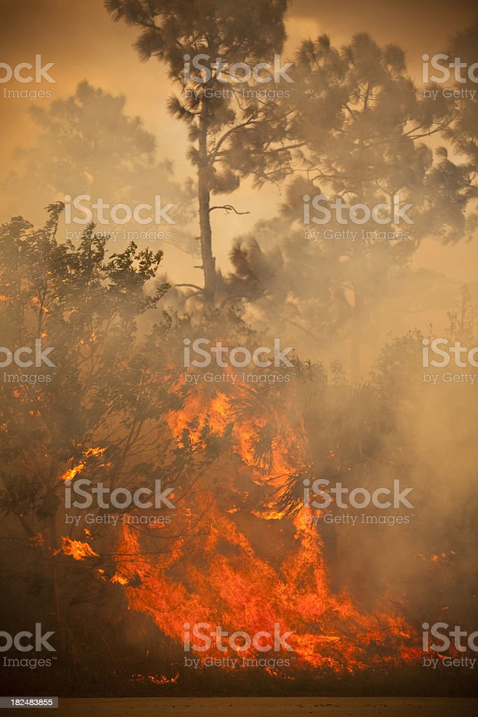 Smoke and burnt wilderness emergency stock photo