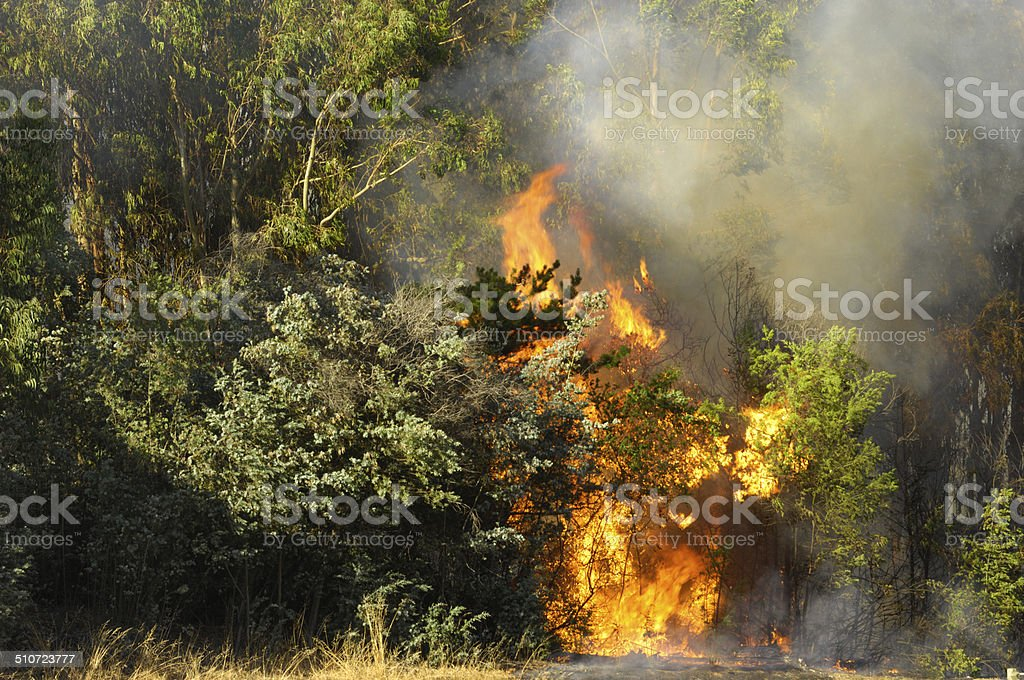 Smoke and Flames From Out of Control Wildfire stock photo