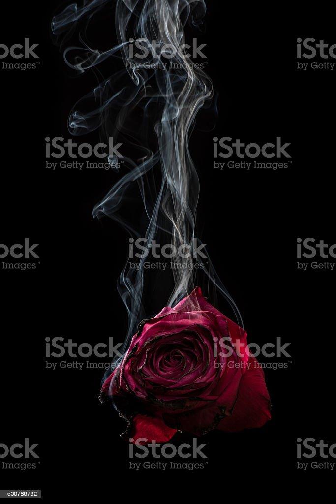 Smoke and Rose. stock photo
