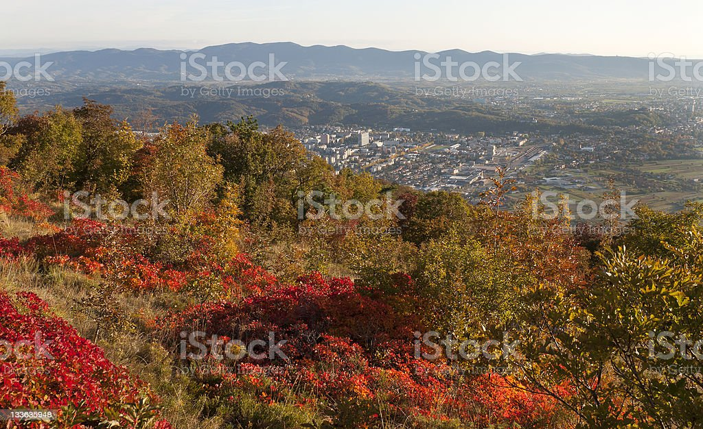 Smoke Bushes above Two Cities royalty-free stock photo
