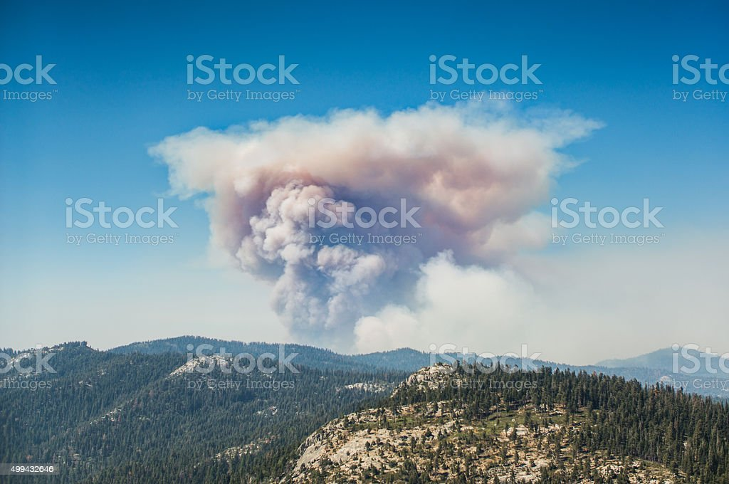 Smoke over the the Forest stock photo