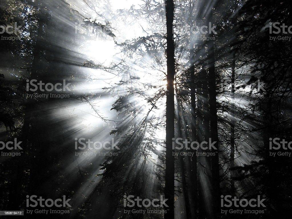 Smoke through the Trees royalty-free stock photo
