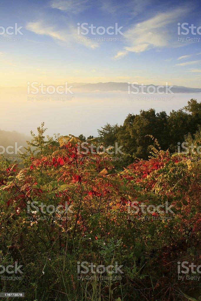 smokies autumn sunrise stock photo