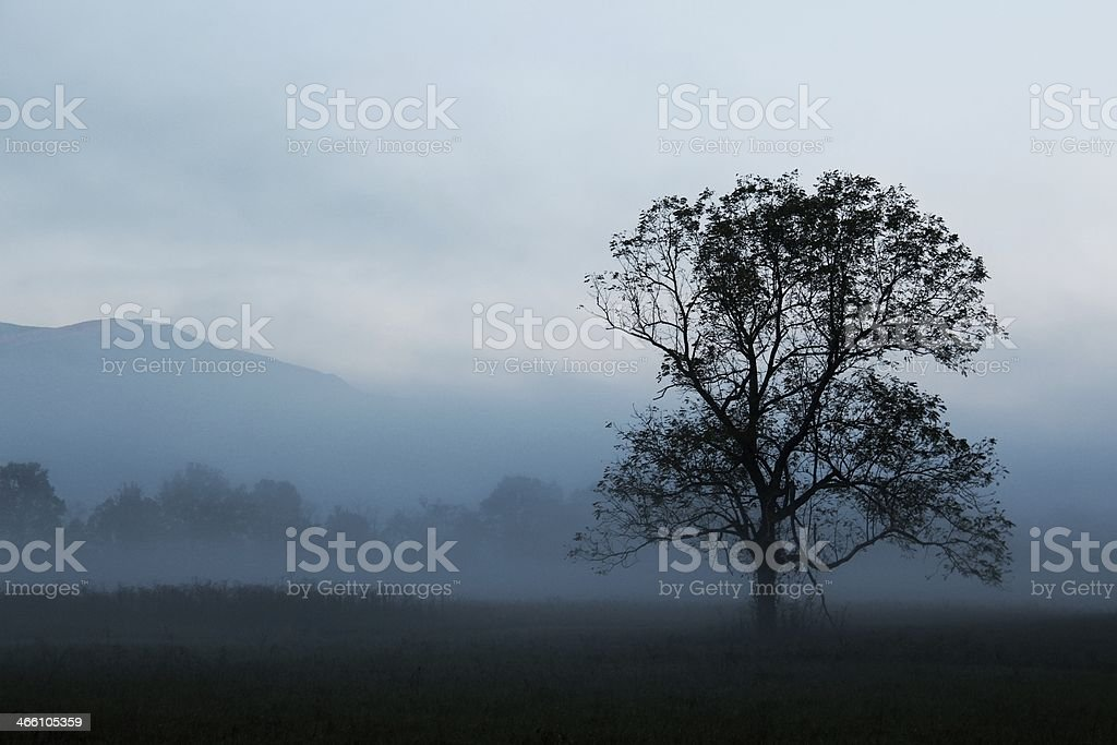 Smoky Blues stock photo