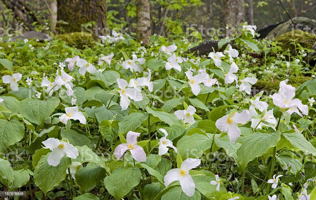 Smoky  Mountain Bouquet stock photo