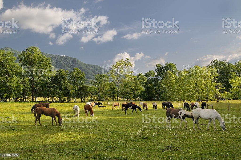 Smoky Mountains Cades Cove Horses in Late Spring stock photo