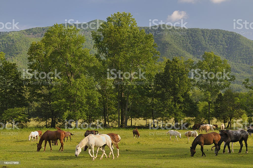 Smoky Mountains Cades Cove in Late Spring stock photo