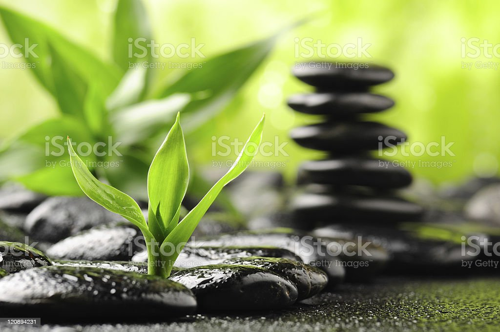 Smooth black stones with plants at a spa royalty-free stock photo