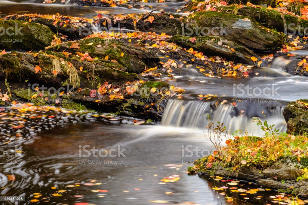 smooth flowing water finds its way around  rocks covered with colorful autumn leaves in the fall stock photo