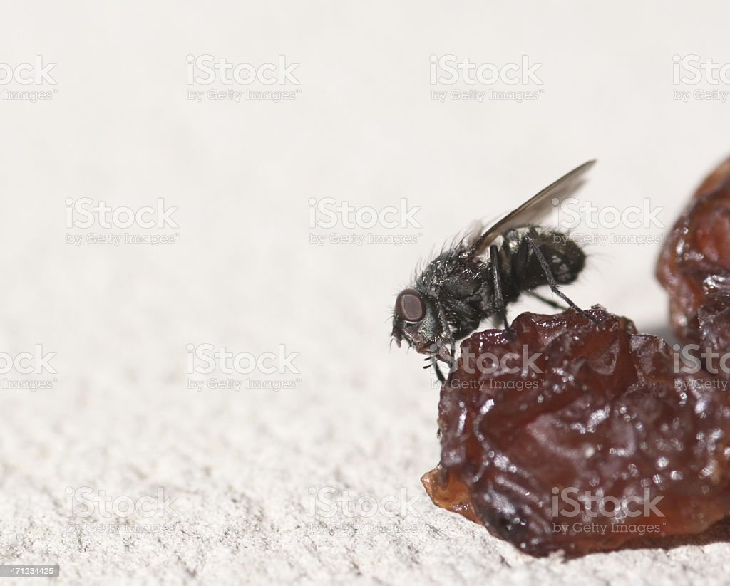 Snack for a Fly stock photo