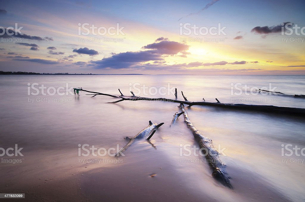 Snag on the shore royalty-free stock photo