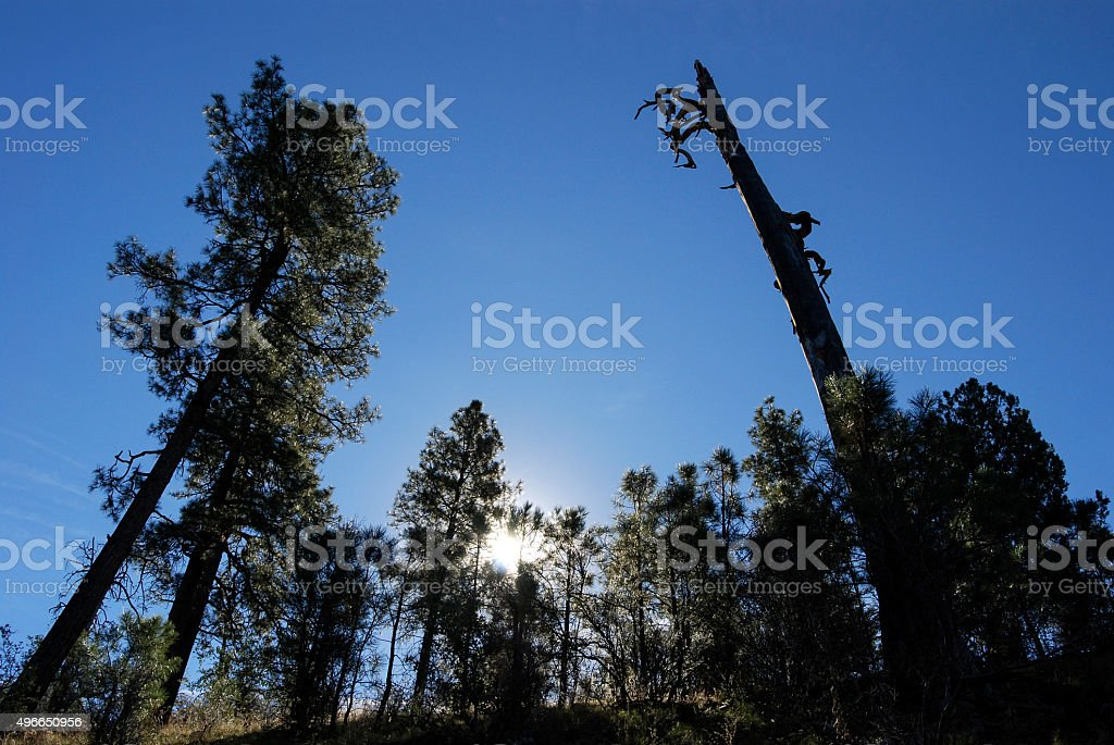 Snag stock photo