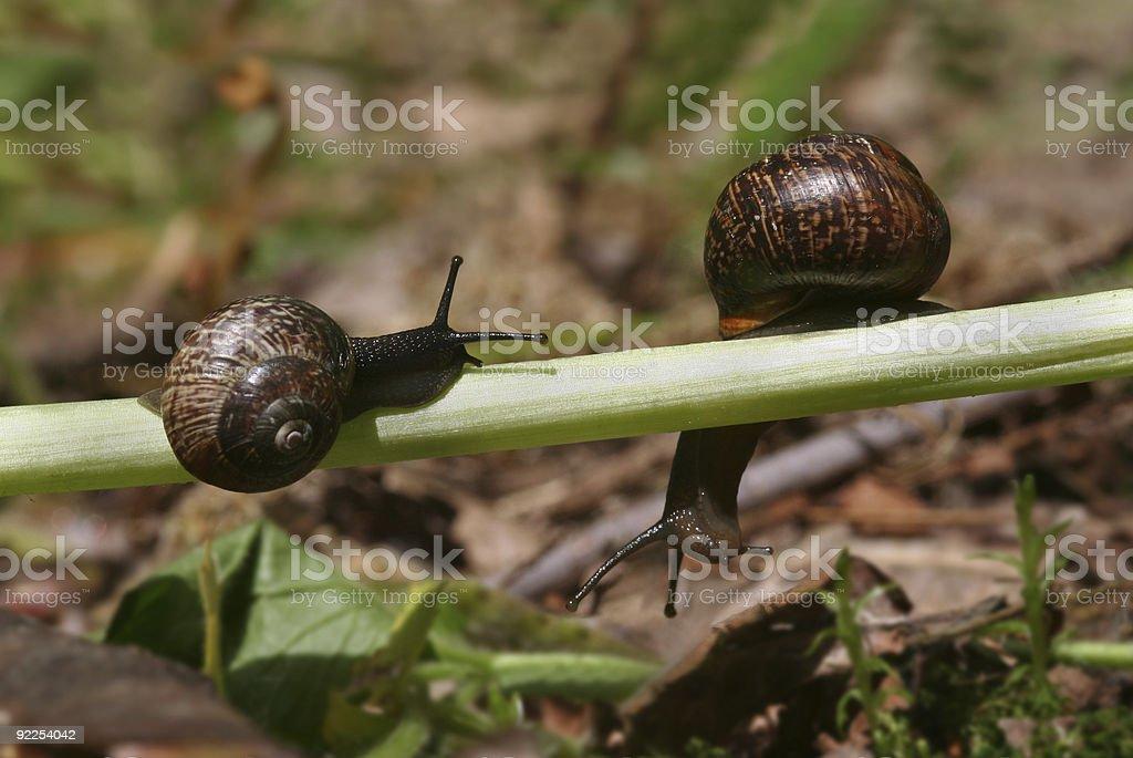 Snail Adventures royalty-free stock photo