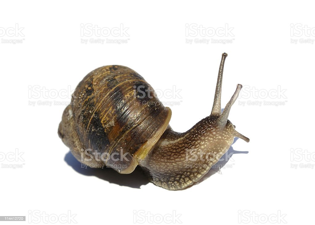 Snail against white, concept speed and time issues royalty-free stock photo