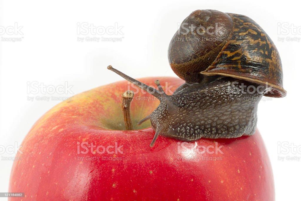 Snail and Apple Macro stock photo