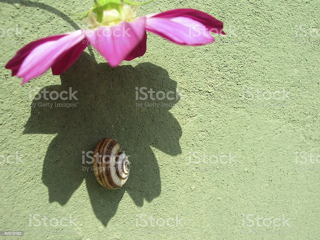 Snail and Flower royalty-free stock photo