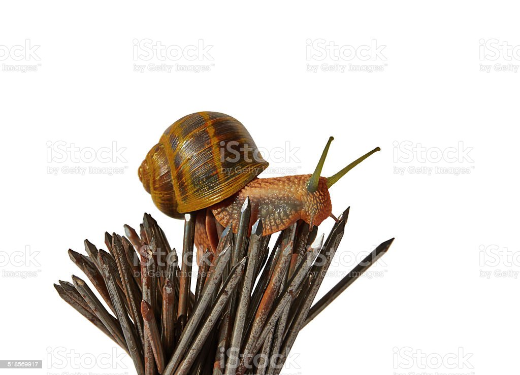 snail and nails royalty-free stock photo
