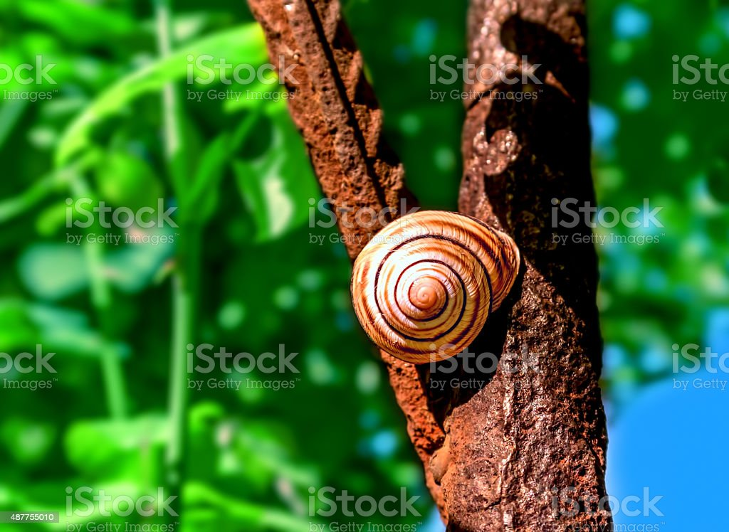 Snail and rusty iron royalty-free stock photo