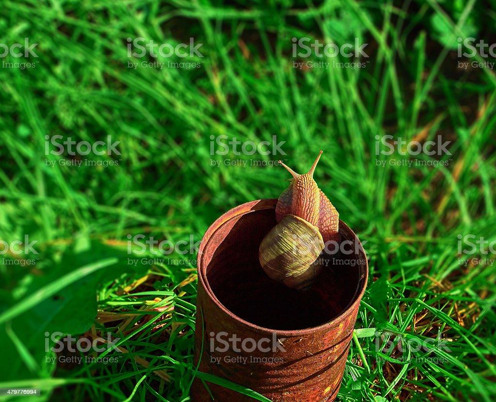 Snail and rusty tin royalty-free stock photo