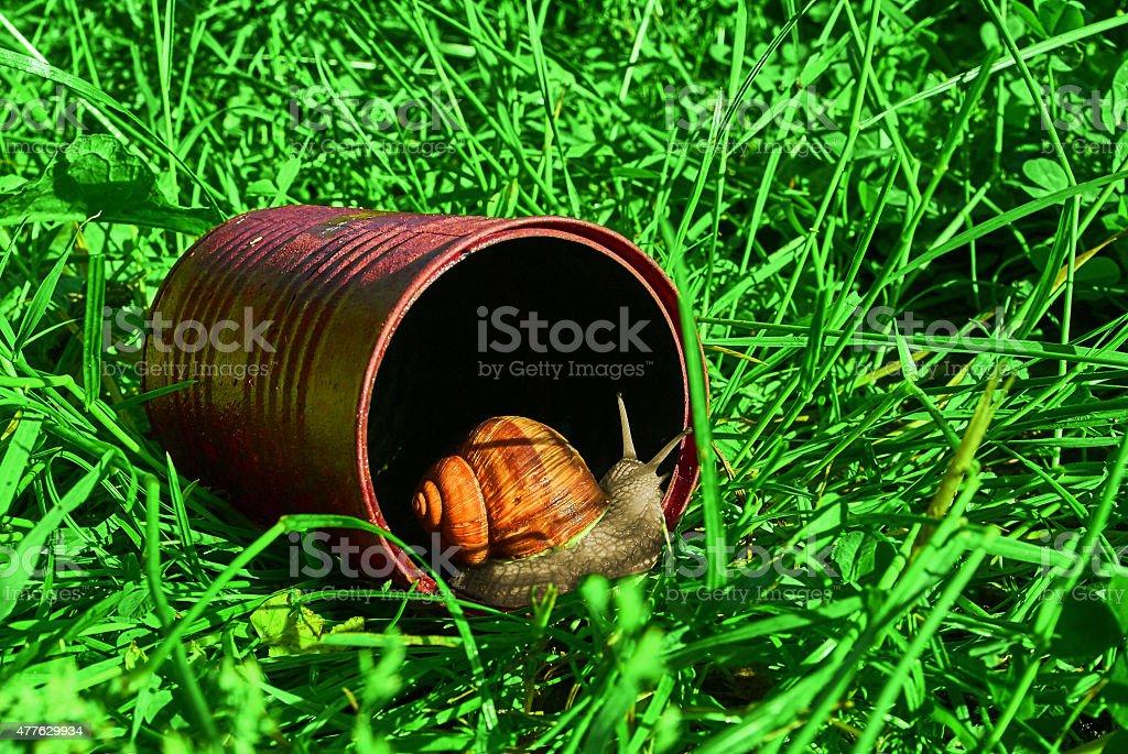 Snail and tin royalty-free stock photo