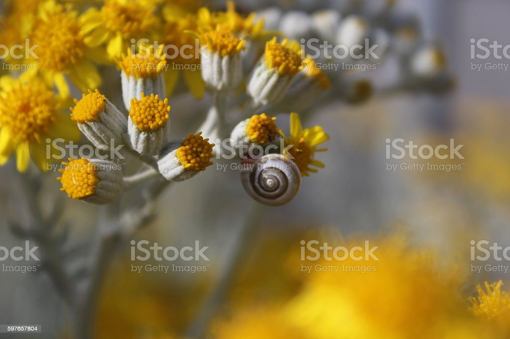 Snail and Yellow Flower stock photo