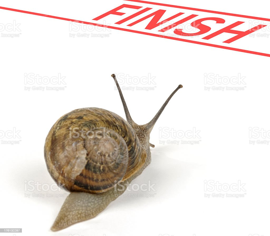 Snail at Finish royalty-free stock photo