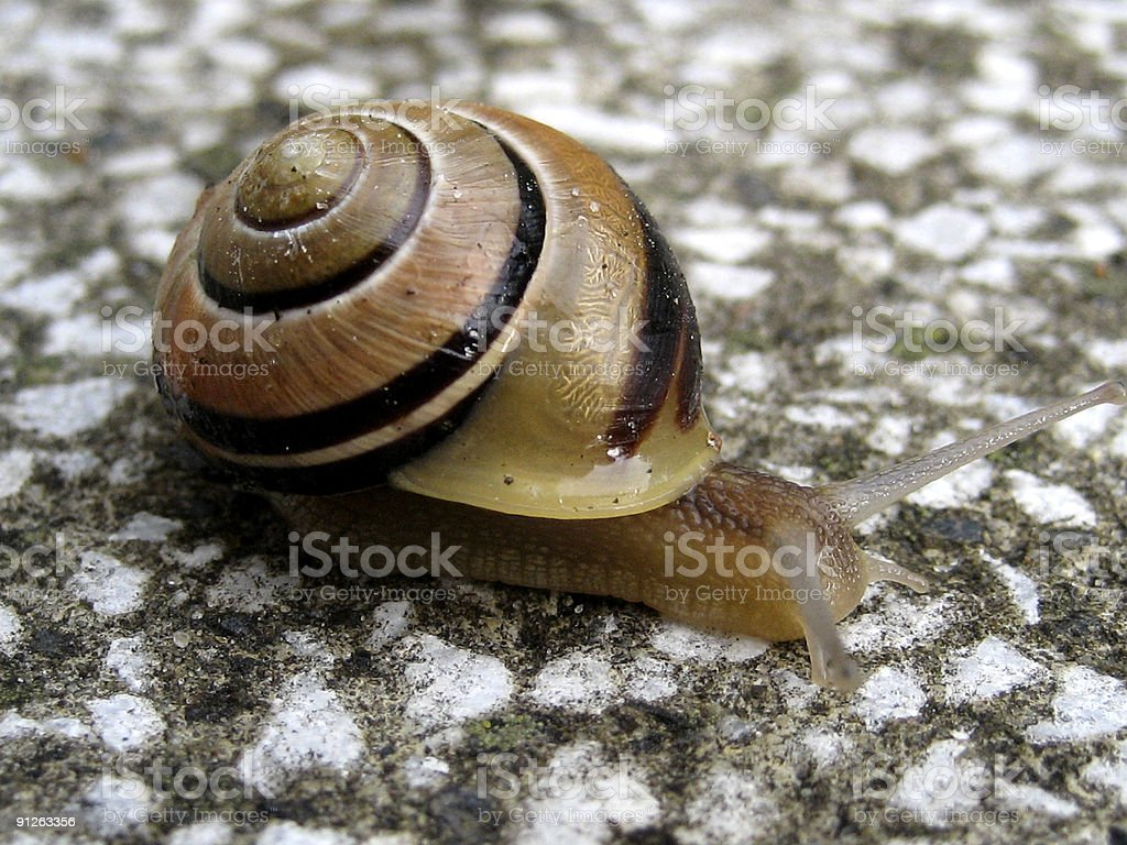 Snail at the Gardenway stock photo