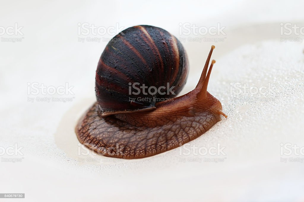 Snail changing direction stock photo