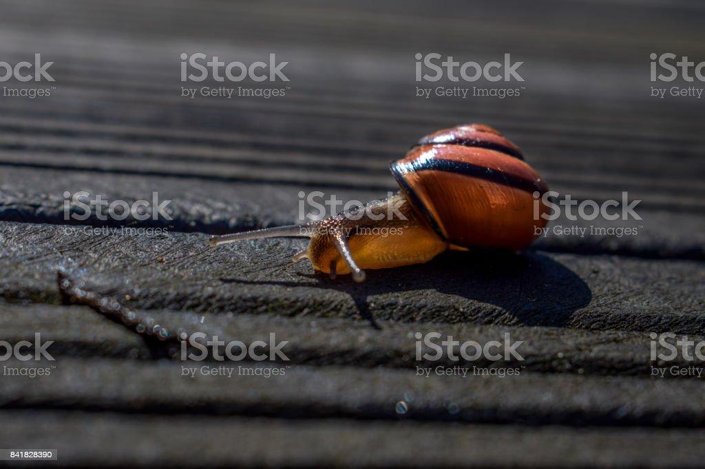 Snail close-up stock photo