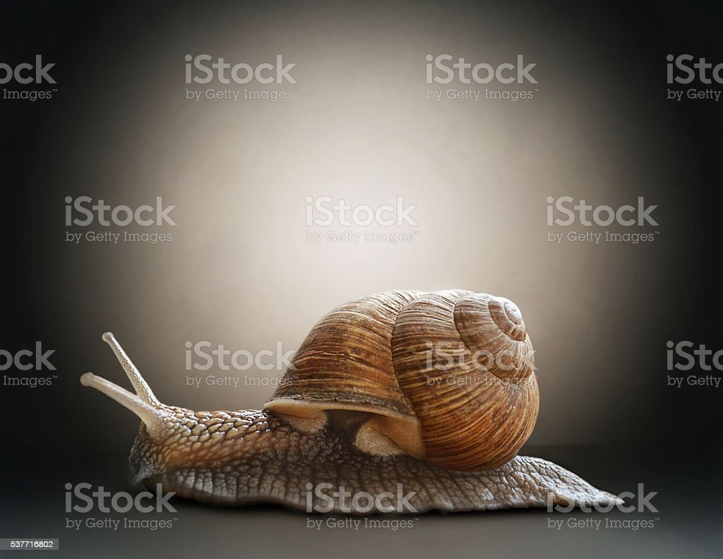Snail. Concept graphic in soft vintage style stock photo