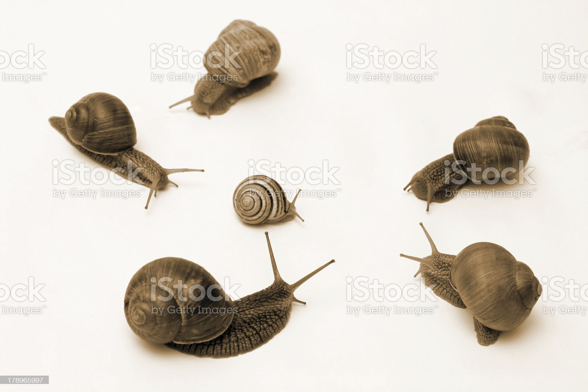 Snail Conflict royalty-free stock photo