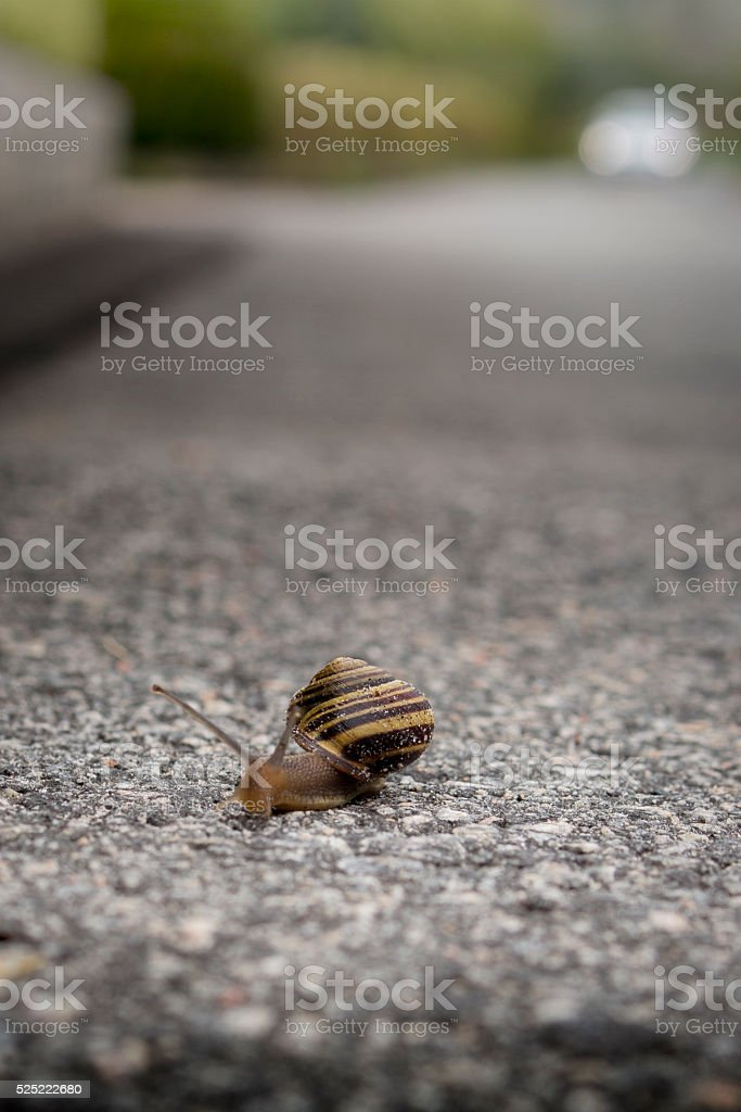snail crawling across the street stock photo