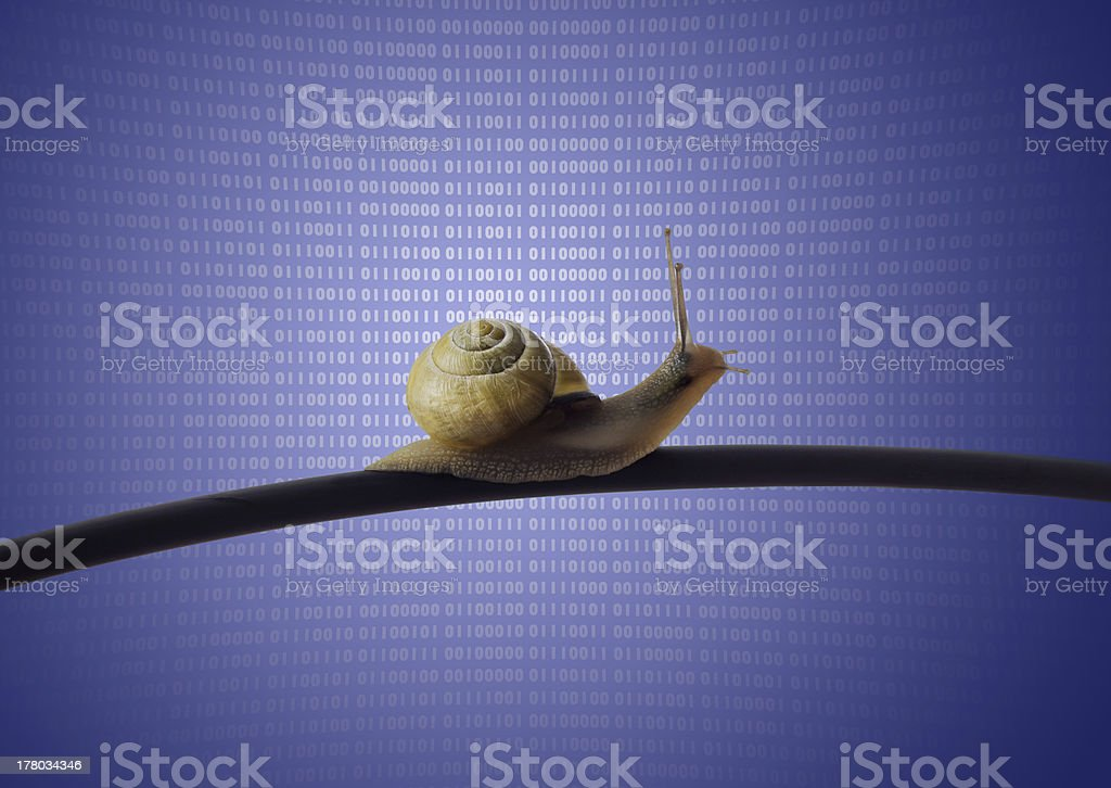 A snail crawling along an Ethernet cable with binary code stock photo