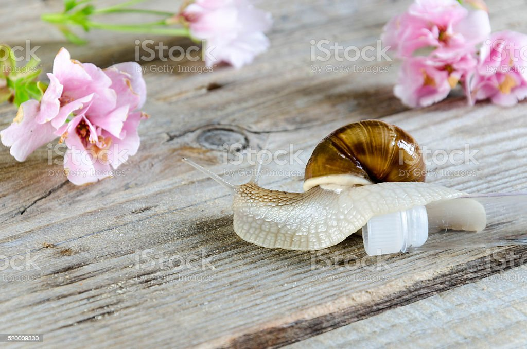 Snail crawling on a tube stock photo