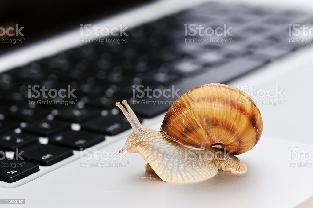Snail crawling on laptop, slowly stock photo