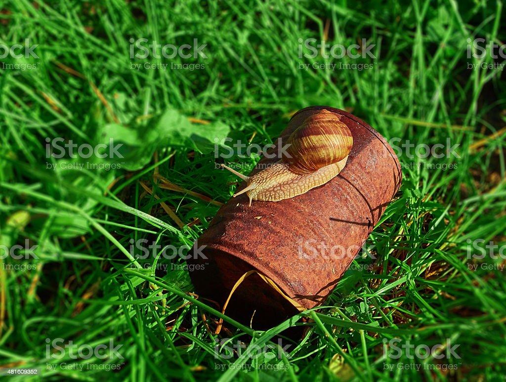 snail crawling on lying rusty tin royalty-free stock photo