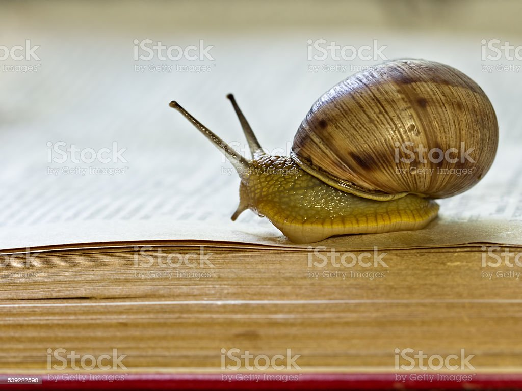 Snail crawling on the open page of abook stock photo