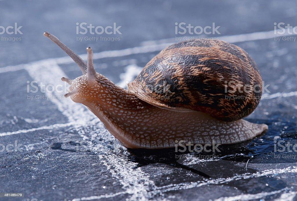 snail crosses the finish line as winner royalty-free stock photo