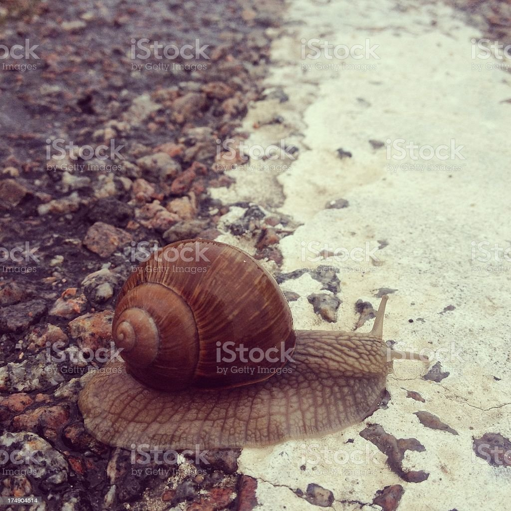 Snail crossing the road stock photo