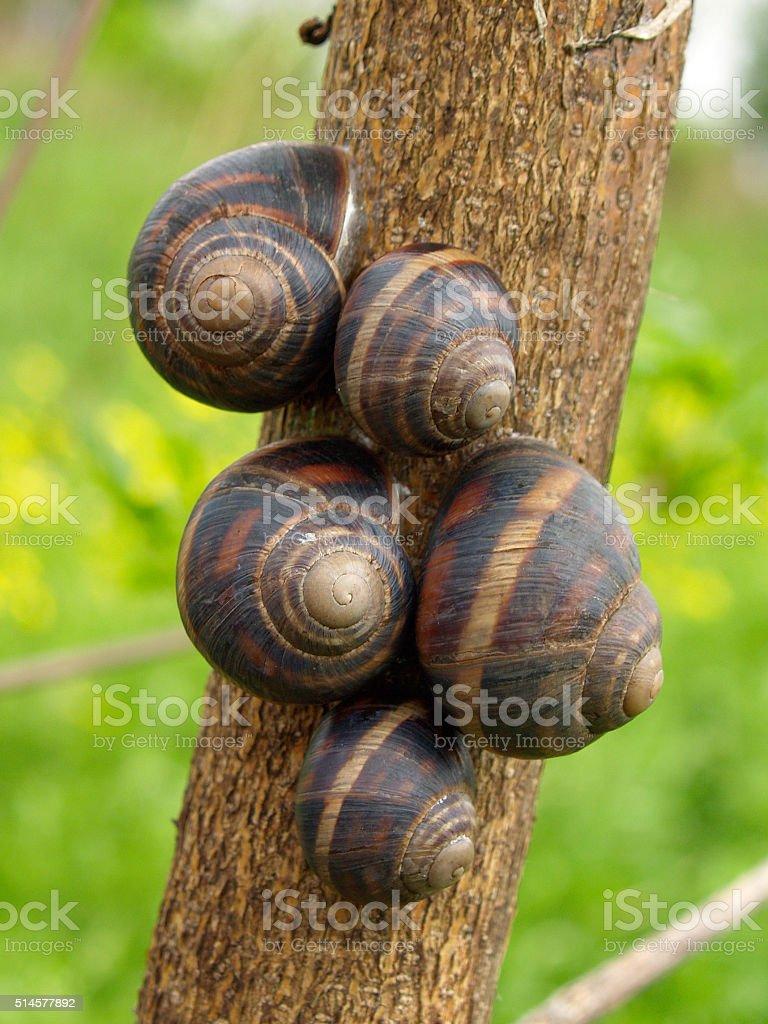 Snail family stock photo